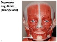 Depressor anguli oris muscle :-