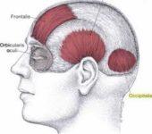 Orbicularis oculi muscle details :-