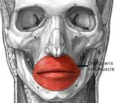 Orbicularis oris muscle :-